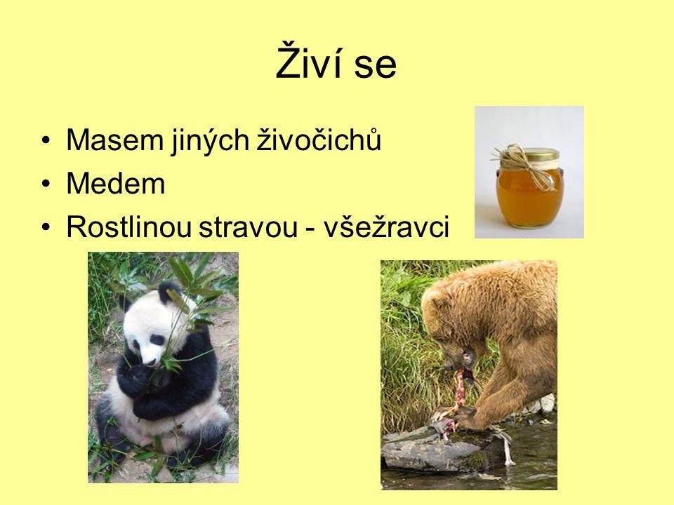 Živí se Masem jiných živočichů Medem Rostlinou stravou - všežravci