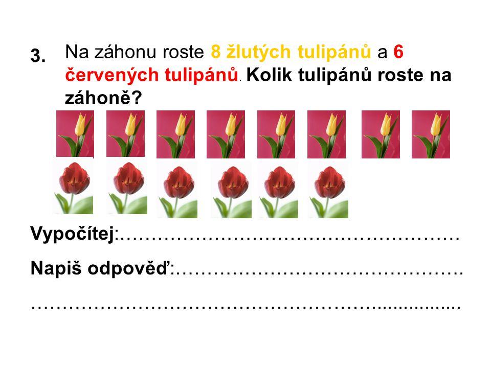 3. Na záhonu roste 8 žlutých tulipánů a 6 červených tulipánů.