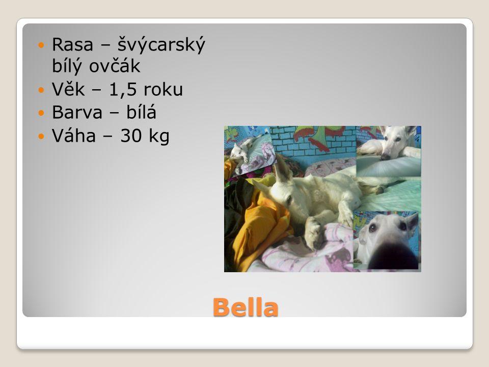 Bella Rasa – švýcarský bílý ovčák Věk – 1,5 roku Barva – bílá Váha – 30 kg
