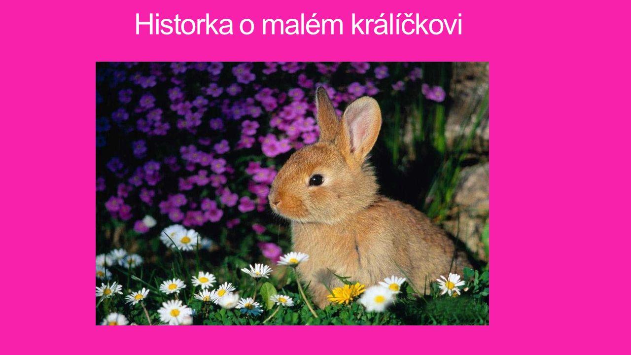 Historka o malém králíčkovi