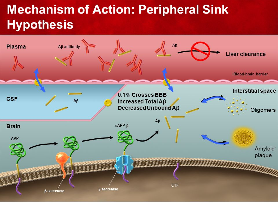 39 Mechanism of Action: Peripheral Sink Hypothesis Liver clearance CSF Plasma sAPP  AA CTF APP  secretase  secretase Brain Blood-brain barrier AA Interstitial space AA Oligomers Amyloid plaque A  antibody 0.1% Crosses BBB Increased Total Aβ Decreased Unbound Aβ