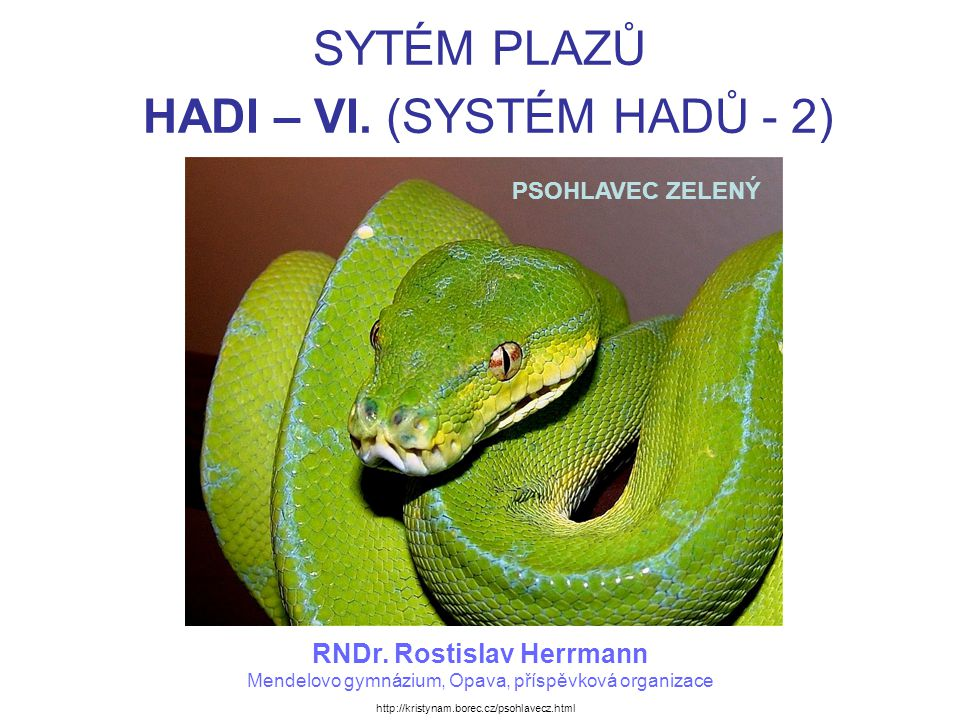 SYSTÉM HADŮ PSOHLAVEC ZELENÝ – lebka. http://www.biolib.cz/cz/taxonimage/id7461/?taxonid=58410