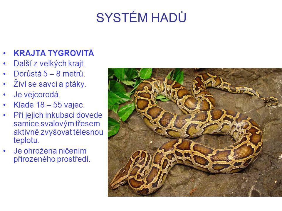 SYSTÉM HADŮ http://www.biolib.cz/cz/image/id7451/ KRAJTA TYGROVITÁ – lebka.