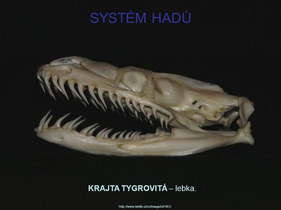 Krajta tygrovitá jako reklamní hračka (nabídka výrobků z pravé hadí kůže… http://exotickozha.ru/opasnye_prekrasnye_zmei_article_5.html