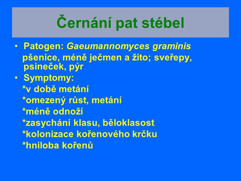 Černání pat stébel Patogen: Gaeumannomyces graminis pšenice, méně ječmen a žito; sveřepy, psineček, pýr Symptomy: *v době metání *omezený růst, metání