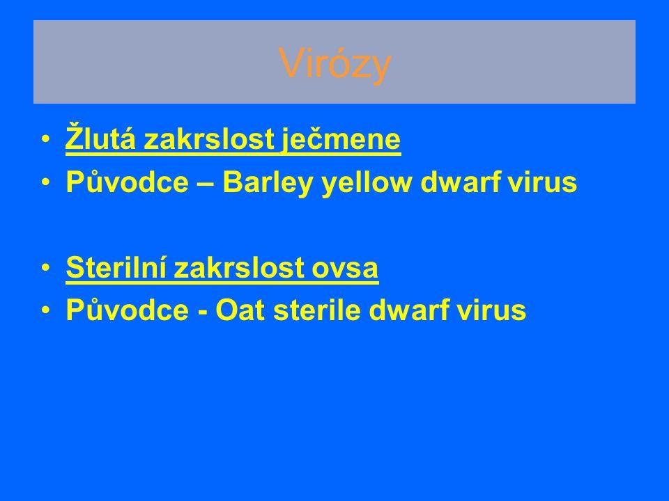 Patogen: Erisyphe graminis - obligátní parazit, variabilní, 60 hostitelských druhů Symptomy: *na všech částech rostlin *bělavé, našedlé kupky mycelia, splývají *nekrotizace *kleistothecia s přívěsky - vřecka Padlí travní