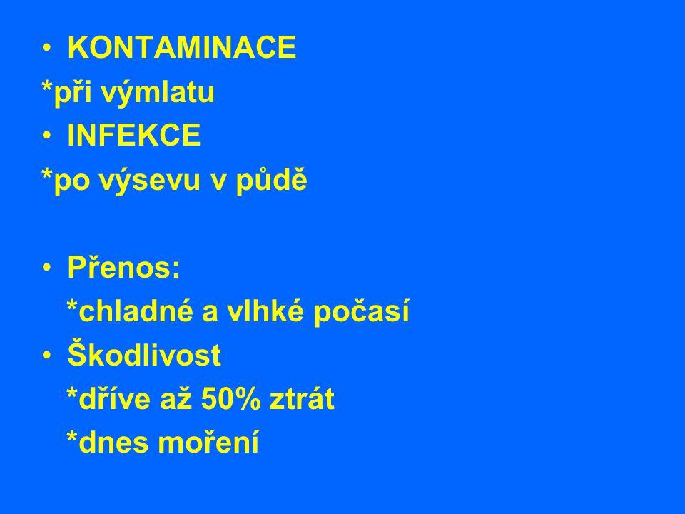 KONTAMINACE *při výmlatu INFEKCE *po výsevu v půdě Přenos: *chladné a vlhké počasí Škodlivost *dříve až 50% ztrát *dnes moření