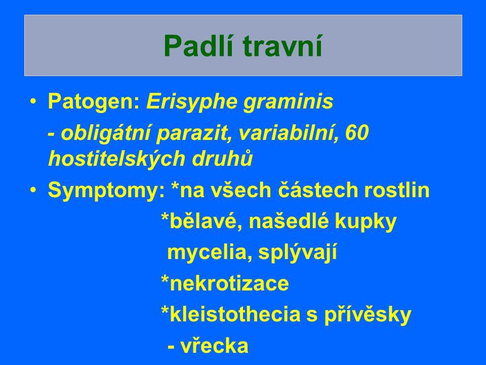 Patogen: Erisyphe graminis - obligátní parazit, variabilní, 60 hostitelských druhů Symptomy: *na všech částech rostlin *bělavé, našedlé kupky mycelia,