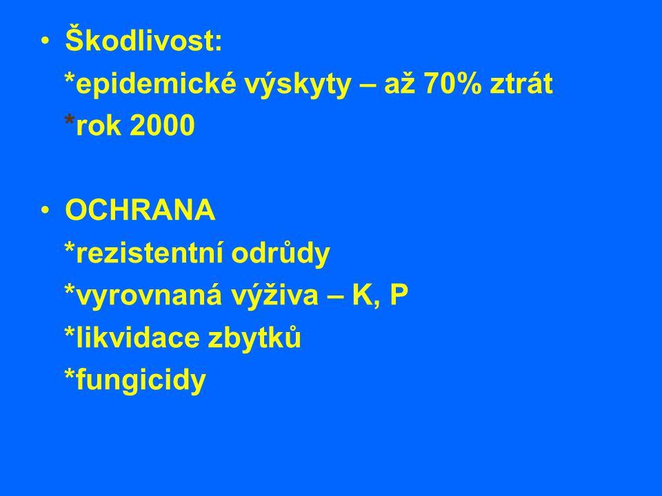 Škodlivost: *epidemické výskyty – až 70% ztrát *rok 2000 OCHRANA *rezistentní odrůdy *vyrovnaná výživa – K, P *likvidace zbytků *fungicidy