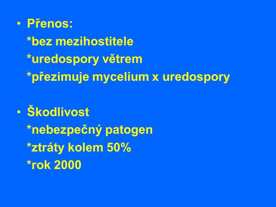 Přenos: *bez mezihostitele *uredospory větrem *přezimuje mycelium x uredospory Škodlivost *nebezpečný patogen *ztráty kolem 50% *rok 2000