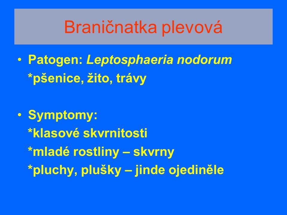 Braničnatka plevová Patogen: Leptosphaeria nodorum *pšenice, žito, trávy Symptomy: *klasové skvrnitosti *mladé rostliny – skvrny *pluchy, plušky – jin