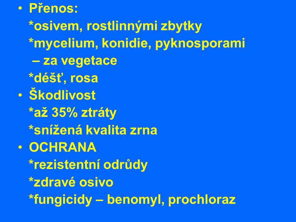 Přenos: *osivem, rostlinnými zbytky *mycelium, konidie, pyknosporami – za vegetace *déšť, rosa Škodlivost *až 35% ztráty *snížená kvalita zrna OCHRANA