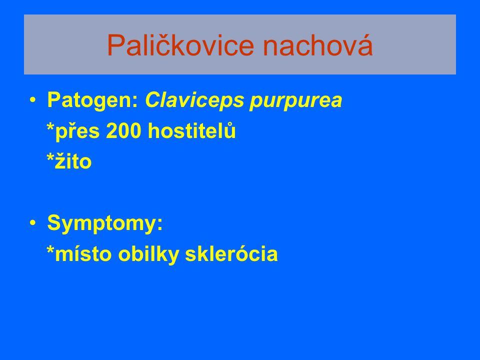 Paličkovice nachová Patogen: Claviceps purpurea *přes 200 hostitelů *žito Symptomy: *místo obilky sklerócia