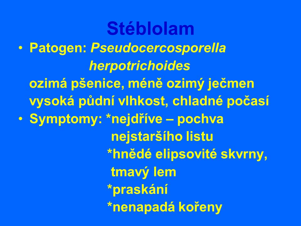 Stéblolam Patogen: Pseudocercosporella herpotrichoides ozimá pšenice, méně ozimý ječmen vysoká půdní vlhkost, chladné počasí Symptomy: *nejdříve – poc