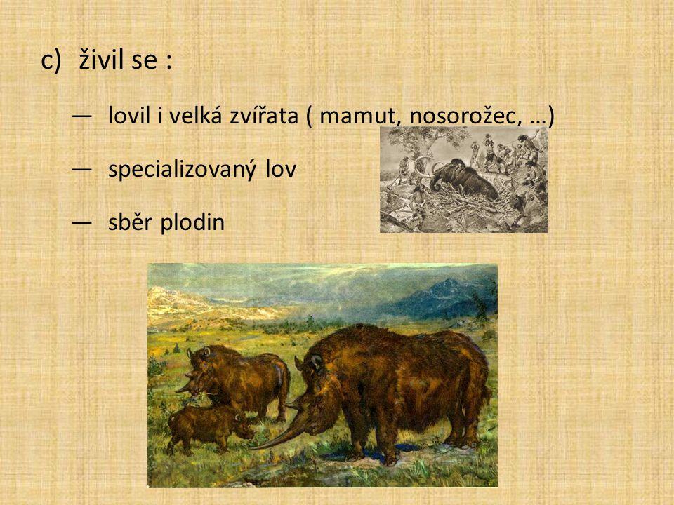 c)živil se : ―lovil i velká zvířata ( mamut, nosorožec, …) ―specializovaný lov ―sběr plodin