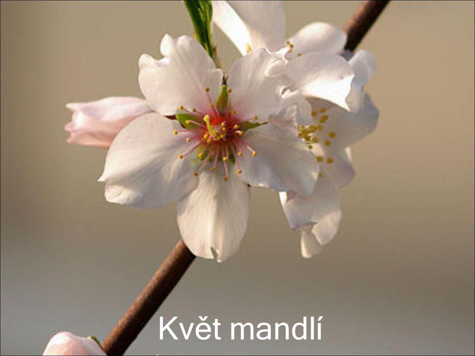 Plod mandle