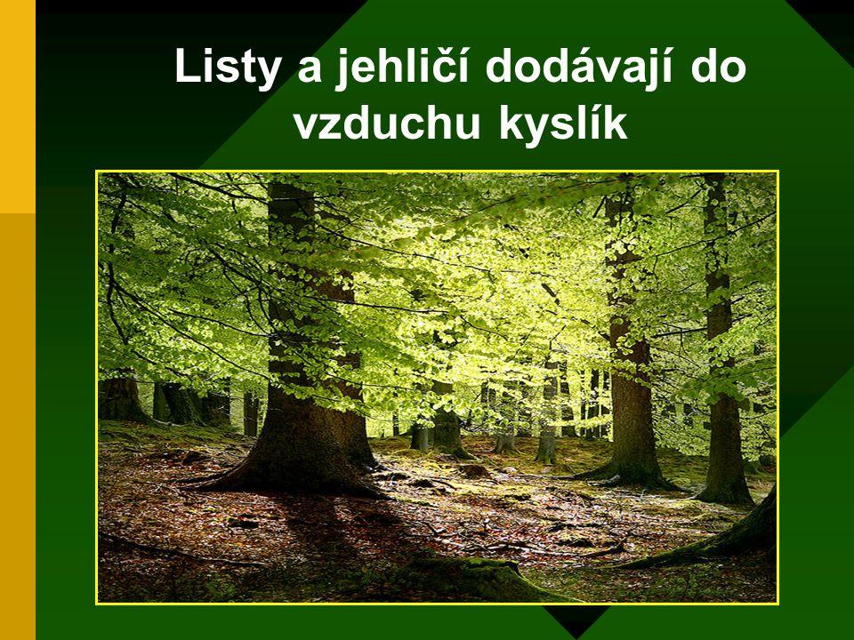 Lesy významně zvlhčují vzduch