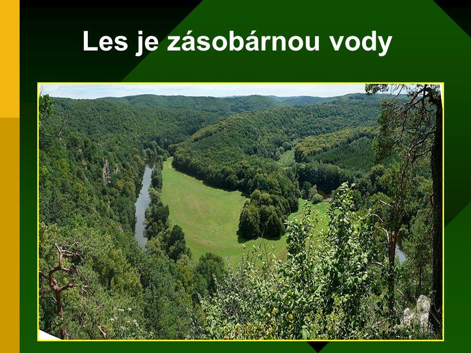 Les je zásobárnou vody