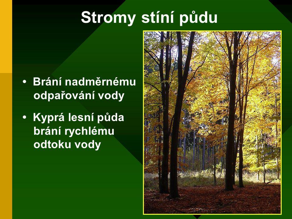 Stromy stíní půdu Brání nadměrnému odpařování vody Kyprá lesní půda brání rychlému odtoku vody