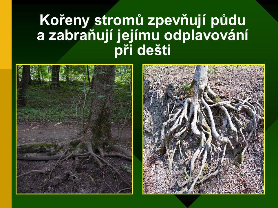 Les se podílí na tvorbě půdy Rostlinné zbytky se mění v silné vrstvy humusu