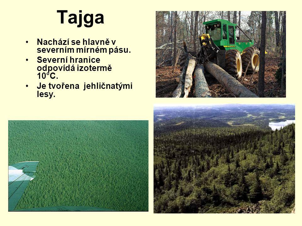 Tajga Nachází se hlavně v severním mírném pásu. Severní hranice odpovídá izotermě 10°C. Je tvořena jehličnatými lesy.