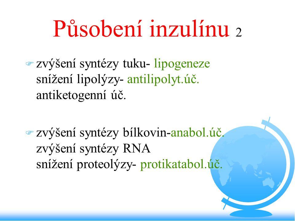 Působení inzulínu 2 F zvýšení syntézy tuku- lipogeneze snížení lipolýzy- antilipolyt.úč. antiketogenní úč. F zvýšení syntézy bílkovin-anabol.úč. zvýše