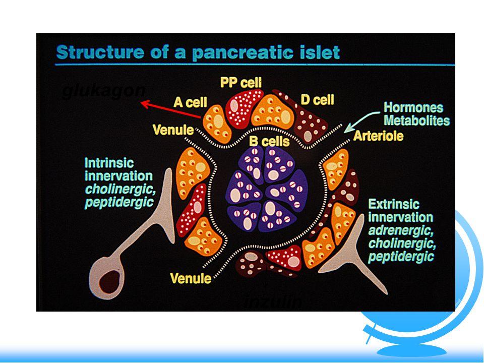 Ketoacidotické koma 2 z Patogeneza:- deficit inzulínu (absol.