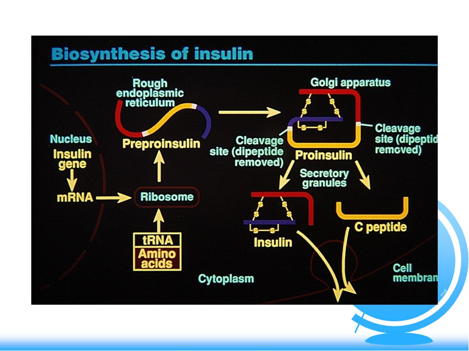 Inzulínový receptor F Glykoprotein 460kDa (gen- krát.ram.19.chrom.) R 2 extracelulární podjednotky  R 2  -podjednotky- intramembranozně a extra- i intracelulárně - 3disulfidické můstky - inzulín se váže na  - stimulace tyrozinkinázy - stimulace proteinkinázové aktivity  snížení počtu receptorů vlivem hyperinzulinismu- down regulace