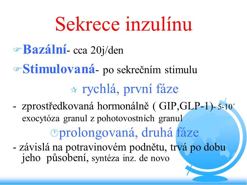 Sekrece inzulínu F Bazální - cca 20j/den F Stimulovaná - po sekrečním stimulu ¶ rychlá, první fáze - zprostředkovaná hormonálně ( GIP,GLP-1) - 5-10´ e