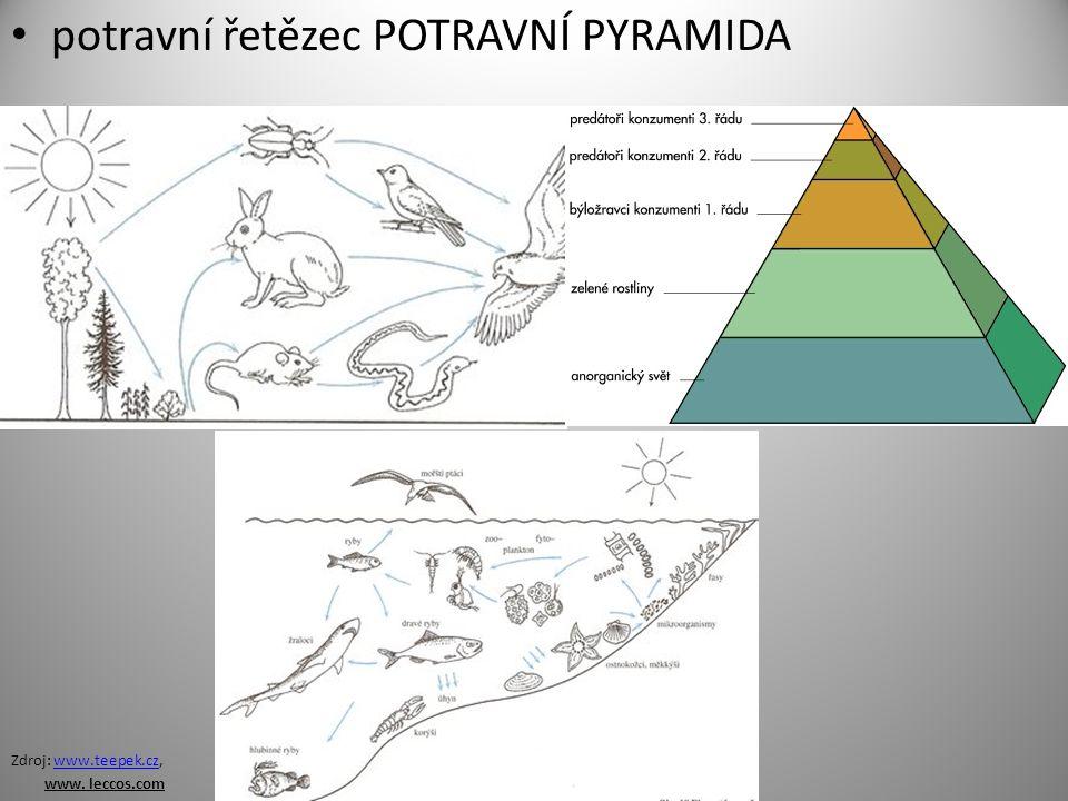 Další vztahy: SYMBIÓZA: výhodné soužití dvou organismů (pomáhají si) PREDACE: vztah lovec – kořist PARAZITISMUS: cizopasník (parazit) žije na úkor hostitele (poškozuje ho)
