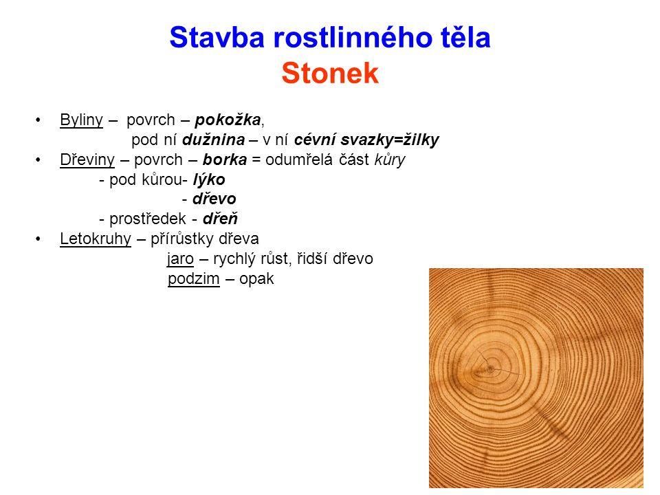 Stavba rostlinného těla Stonek Byliny – povrch – pokožka, pod ní dužnina – v ní cévní svazky=žilky Dřeviny – povrch – borka = odumřelá část kůry - pod