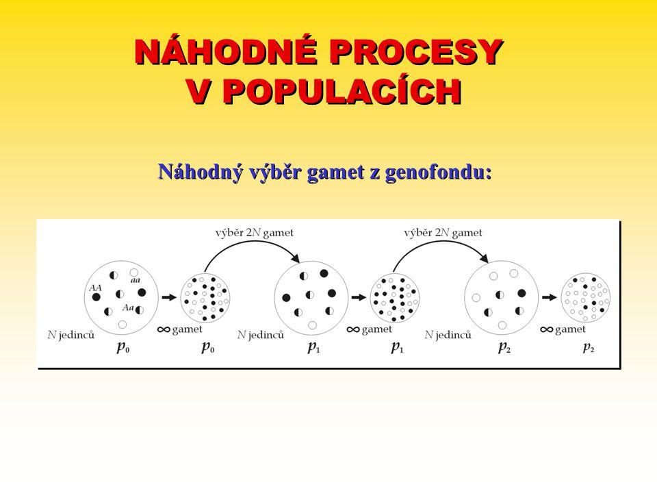 NÁHODNÉ PROCESY V POPULACÍCH NÁHODNÉ PROCESY V POPULACÍCH Náhodný výběr gamet z genofondu: