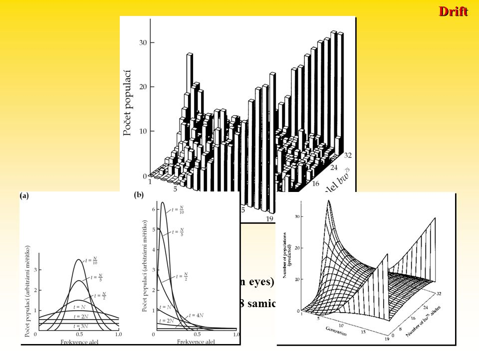 Drift a velikost populace Závěr 3: Drift způsobuje ZTRÁTU PROMĚNLIVOSTI v populaci.