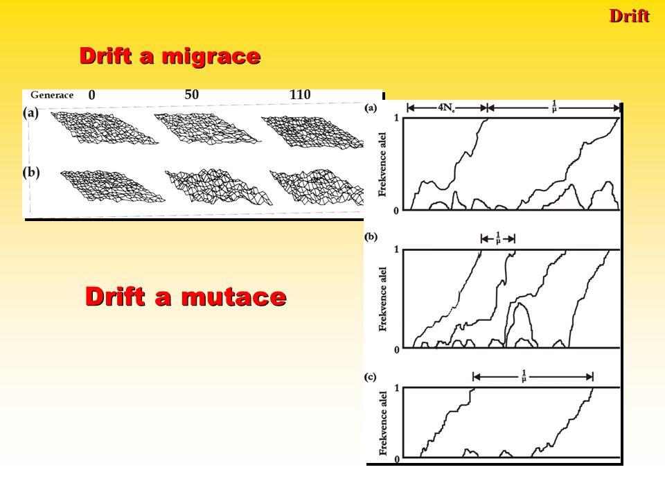 Drift Drift a migrace Drift a mutace