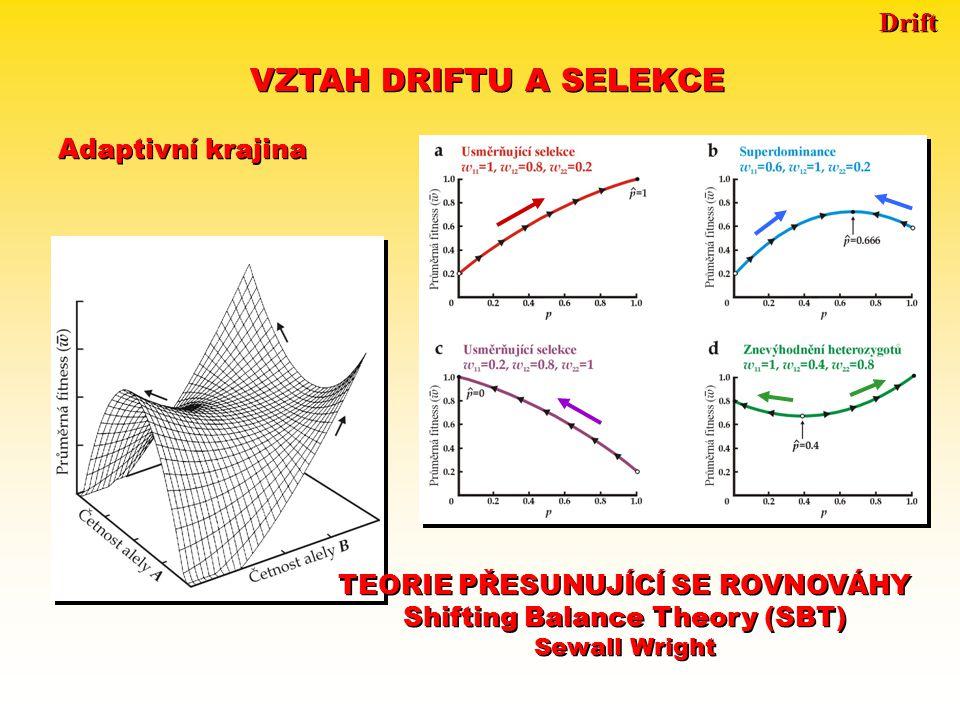 Drift TEORIE PŘESUNUJÍCÍ SE ROVNOVÁHY Shifting Balance Theory (SBT) TEORIE PŘESUNUJÍCÍ SE ROVNOVÁHY Shifting Balance Theory (SBT) Pojem adaptivní krajiny má 2 vzájemně nekompatibilní významy: 1.Pole kombinací alel: hodnota fitness přiřazena genotypu  N genotypů  N + 1 dimenzí  diskontinuální povrch, populace = shluk bodů 2.Pole průměrných frekvencí alel  počet dimenzí = počet sad alelových frekvencí  kontinuální povrch Pojem adaptivní krajiny má 2 vzájemně nekompatibilní významy: 1.Pole kombinací alel: hodnota fitness přiřazena genotypu  N genotypů  N + 1 dimenzí  diskontinuální povrch, populace = shluk bodů 2.Pole průměrných frekvencí alel  počet dimenzí = počet sad alelových frekvencí  kontinuální povrch Předpoklady: prostředí se mění  populace v neustálém pohybu mutace  nové rozměry, nové cesty vzhůru malé populace (drift)  možnost sestupu do adaptivního údolí Předpoklady: prostředí se mění  populace v neustálém pohybu mutace  nové rozměry, nové cesty vzhůru malé populace (drift)  možnost sestupu do adaptivního údolí