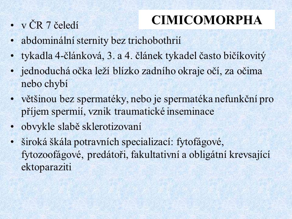 v ČR 7 čeledí abdominální sternity bez trichobothrií tykadla 4-článková, 3. a 4. článek tykadel často bičíkovitý jednoduchá očka leží blízko zadního o