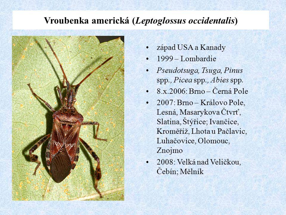 západ USA a Kanady 1999 – Lombardie Pseudotsuga, Tsuga, Pinus spp., Picea spp., Abies spp. 8.x.2006: Brno – Černá Pole 2007: Brno – Královo Pole, Lesn