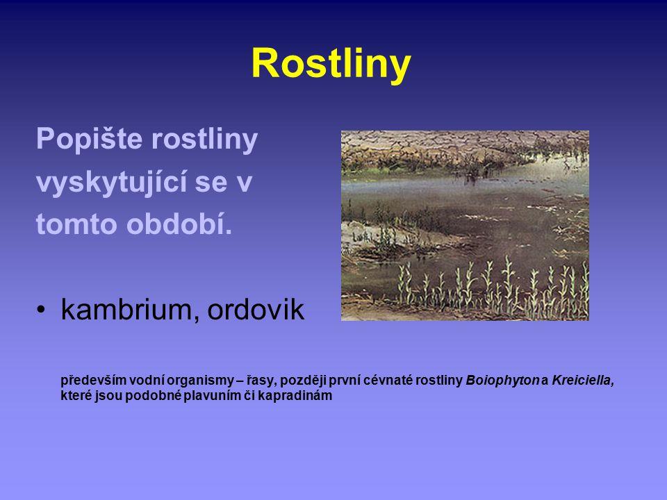 Rostliny Popište rostliny vyskytující se v tomto období. kambrium, ordovik především vodní organismy – řasy, později první cévnaté rostliny Boiophyton