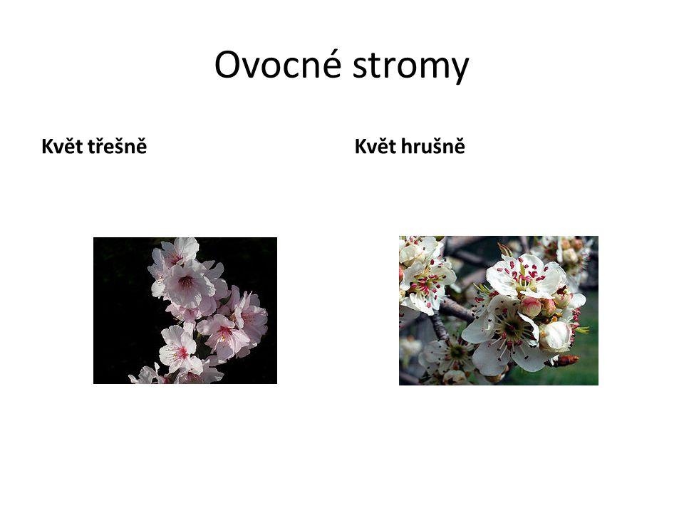 Ovocné stromy Květ třešněKvět hrušně