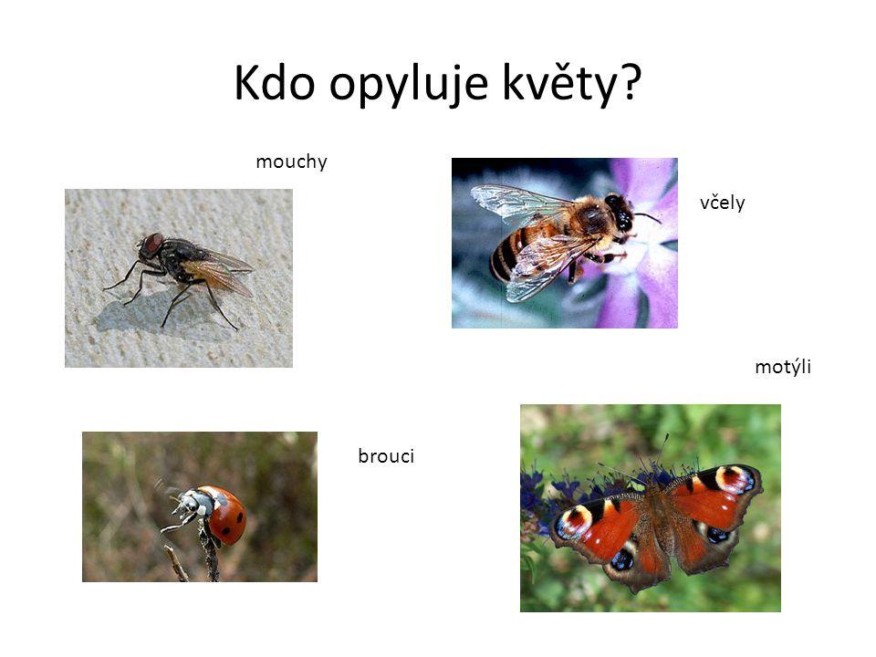 Kdo opyluje květy? brouci včely mouchy motýli