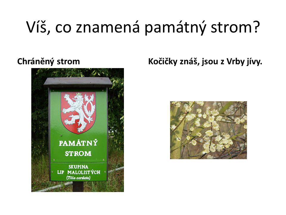 Víš, co znamená památný strom? Chráněný stromKočičky znáš, jsou z Vrby jívy.