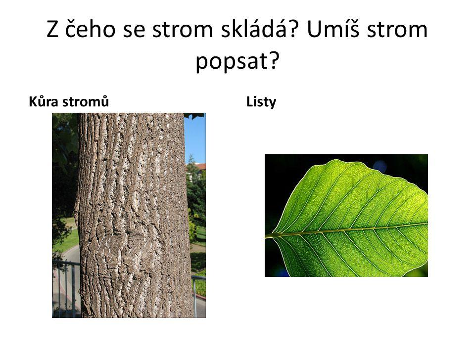 Z čeho se strom skládá? Umíš strom popsat? Kůra stromůListy
