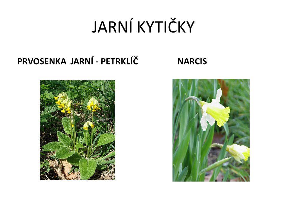 Pro 1. třídu sestavila Mgr. Dana Šafránková 2010