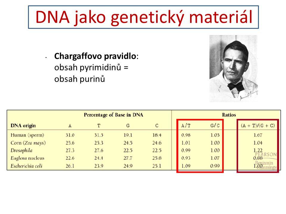 DNA jako genetický materiál Chargaffovo pravidlo: obsah pyrimidinů = obsah purinů