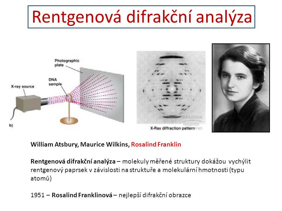 Rentgenová difrakční analýza William Atsbury, Maurice Wilkins, Rosalind Franklin Rentgenová difrakční analýza – molekuly měřené struktury dokážou vychýlit rentgenový paprsek v závislosti na struktuře a molekulární hmotnosti (typu atomů) 1951 – Rosalind Franklinová – nejlepší difrakční obrazce