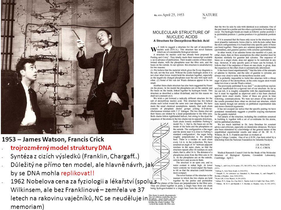 1953 – James Watson, Francis Crick - trojrozměrný model struktury DNA - Syntéza z cizích výsledků (Franklin, Chargaff..) - Důležitý ne přímo ten model, ale hlavně návrh, jak by se DNA mohla replikovat!.