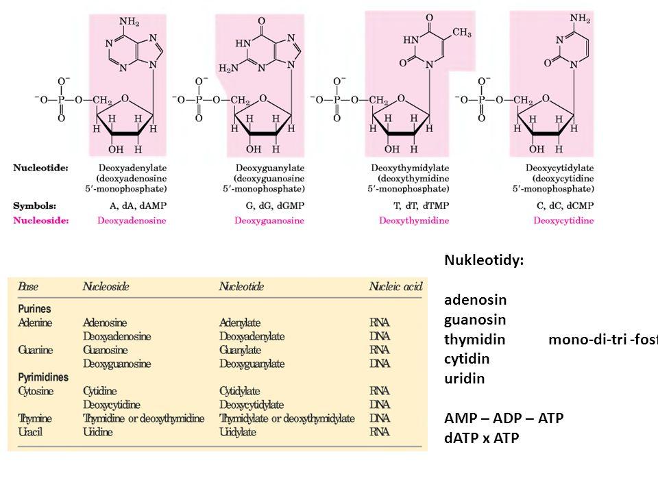 Struktura NK Nukleotidy: adenosin guanosin thymidinmono-di-tri -fosfát cytidin uridin AMP – ADP – ATP dATP x ATP