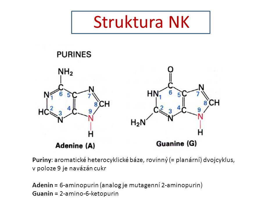 Struktura NK Puriny: aromatické heterocyklické báze, rovinný (= planární) dvojcyklus, v poloze 9 je navázán cukr Adenin = 6-aminopurin (analog je mutagenní 2-aminopurin) Guanin = 2-amino-6-ketopurin