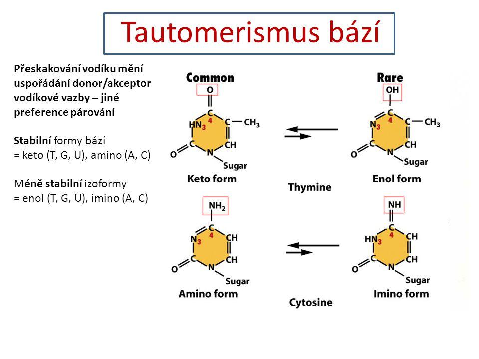 Tautomerismus bází Přeskakování vodíku mění uspořádání donor/akceptor vodíkové vazby – jiné preference párování Stabilní formy bází = keto (T, G, U), amino (A, C) Méně stabilní izoformy = enol (T, G, U), imino (A, C)