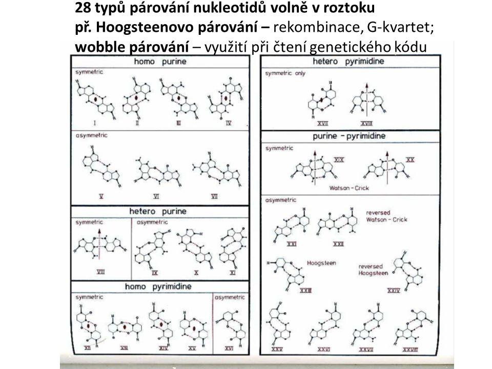 28 typů párování nukleotidů volně v roztoku př.